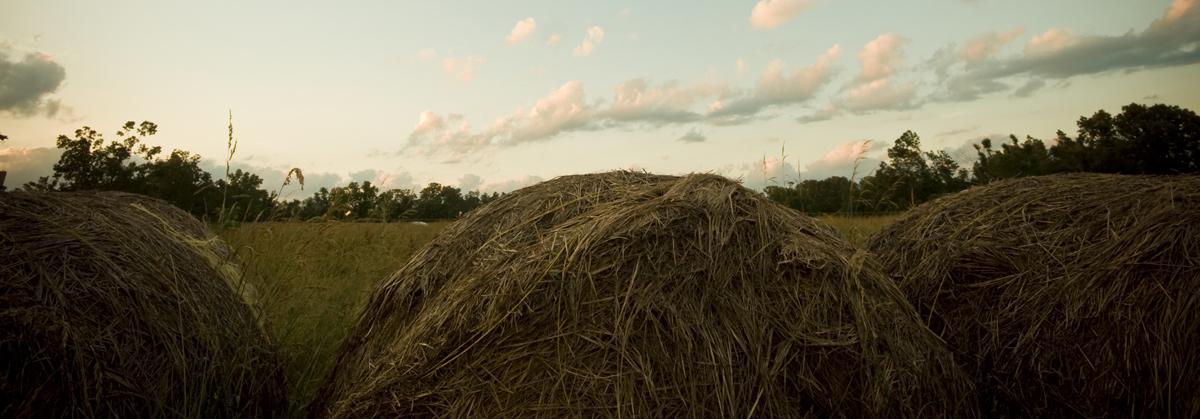 newman_farms-26-lg